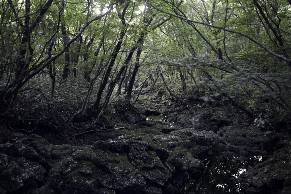 Dans la forêt du Halasan
